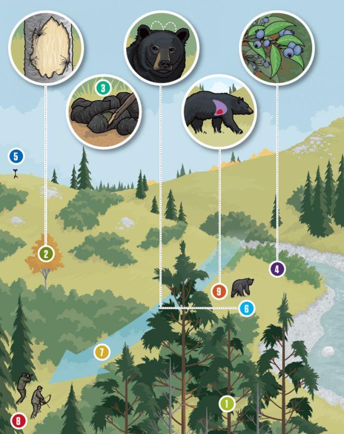 Nine Tips for Spot-and-Stalk Black Bear Hunting | Field & Stream