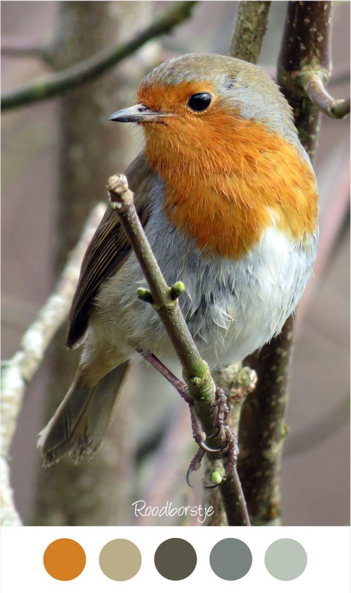 Meer dan 1000 ideeën over Oranje Slaapkamers op Pinterest - Oranje ...