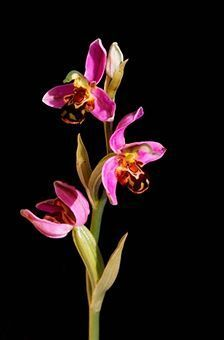 Basic Facts About Home Grown Orchids You Certainly Need to Know