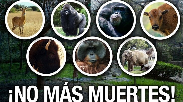 Petition · Greenpeace: We demand protection for animals Chapultepec Zoo ·…