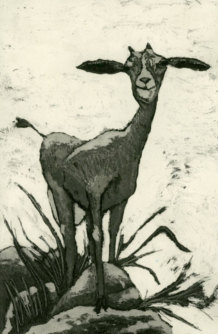 Goat art print etching of goat on rocks in by mariannjohansenellis