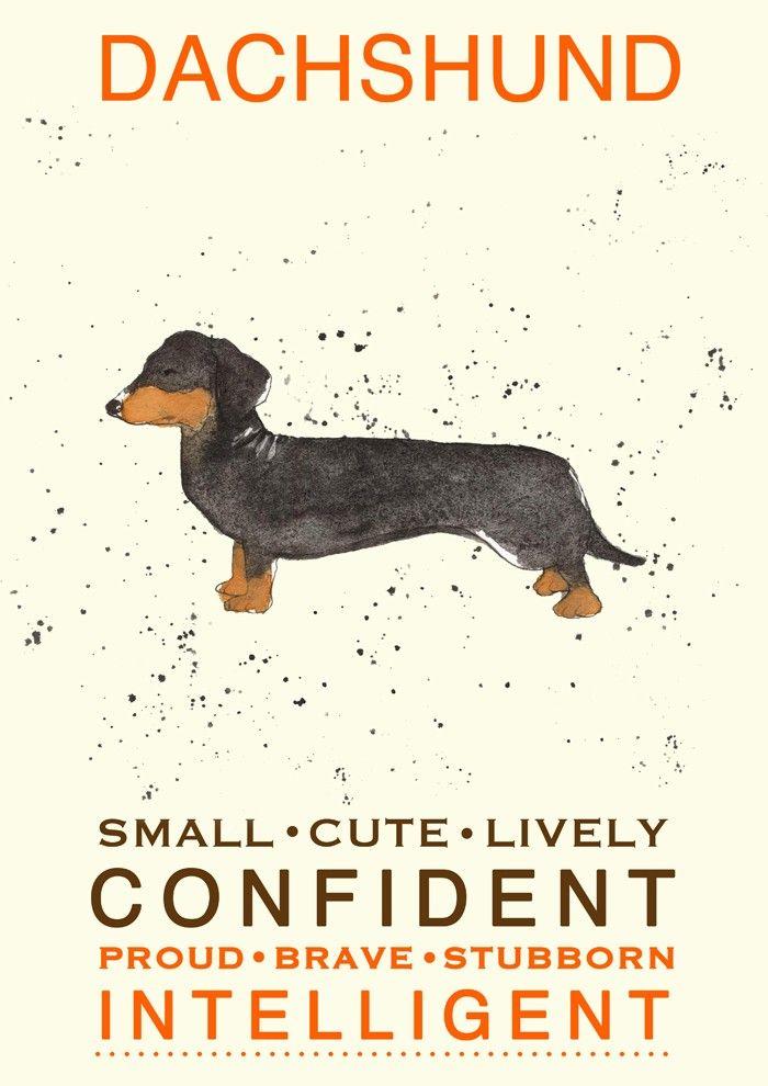 Artista cria lindas pinturas revelando a personalidade de raças caninas - Portal do Dog - Para quem ama cachorros!