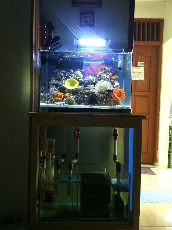 My new saltwater tank setup