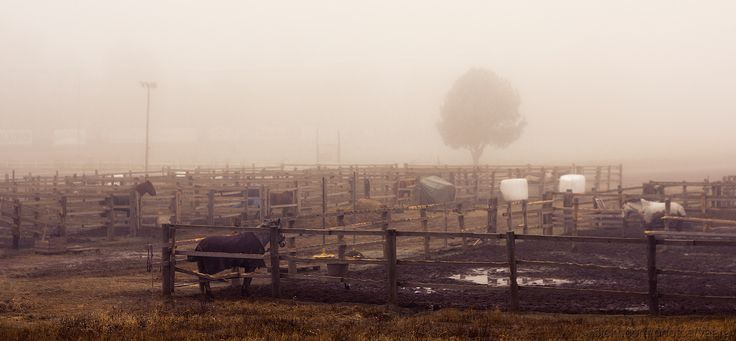 https://flic.kr/p/qYuFDL | Horses in the Mist | Fog settles amidst horse pens. Tree in the distance is almost gone.