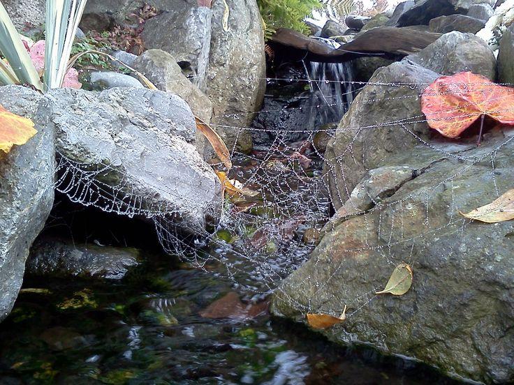 Cobweb over our pond, Waterscene Designs, Ladner BC