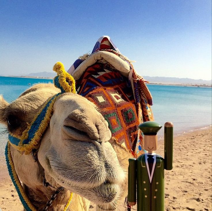 Thank you to Thomas Gray Dawber (@tgdawbs) for sharing this great photograph. We think that this camel might be trying to give our little friend a kiss. #MyGreenMan #VogueFestival http://www.harrods.com/style-insider/news/ss15/harrods-my-green-man-competition