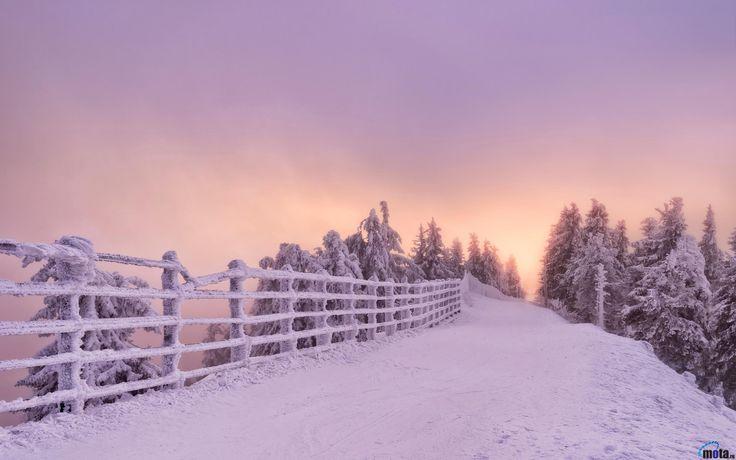 Обои для рабочего стола Дорога с изгородью зимой