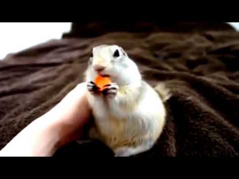 Animal Funny Videos