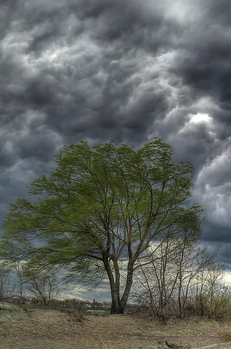 """""""Weathering the Storm"""" - Headlands Beach State Park on Lake Erie in Ohio.I was on my way back down the beach when I saw this tree blowing in the strong wind. I like the blowing leaves against the dark clouds."""