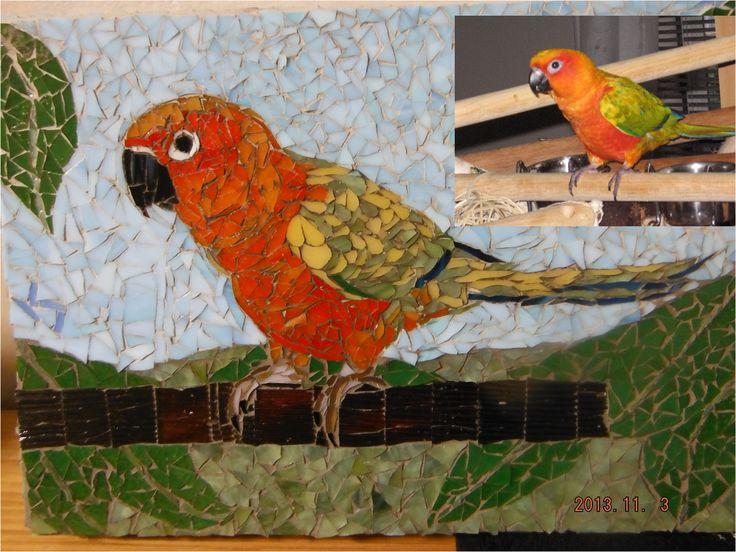 Jenday conure mosaic portrait