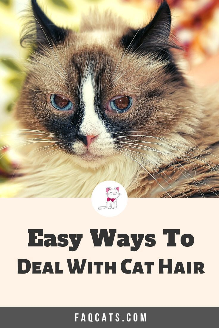 Dealing With Cat Hair And Shedding In 2020 Tabby Cat Cute Cats And Kittens Cat Shedding