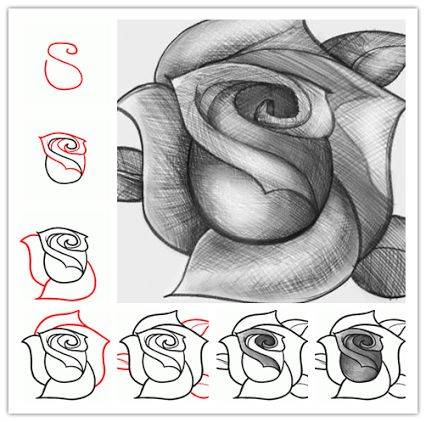 How to sketch a rose step by step