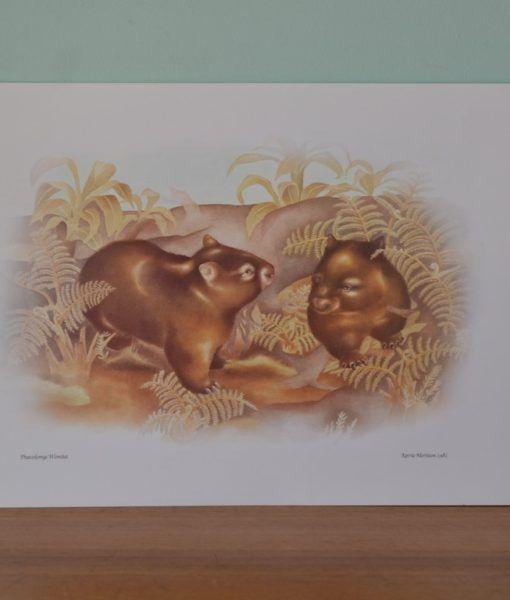 Vintage print Kerrie Mortison 1981 Wombat Australiana