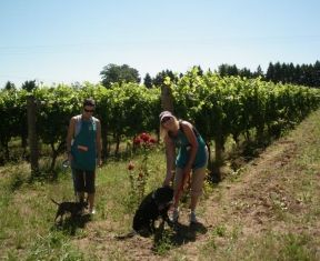 Annual Events   Oregon Wine, Vineyards, Wineries and Wine Tours
