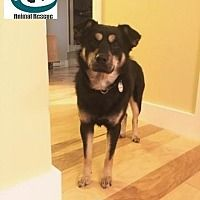 Huntsville, Ontario - Mixed Breed (Medium). Meet Jasper - Meat Farm Survivor!, a for adoption. https://www.adoptapet.com/pet/20237646-huntsville-ontario-mixed-breed-medium-mix