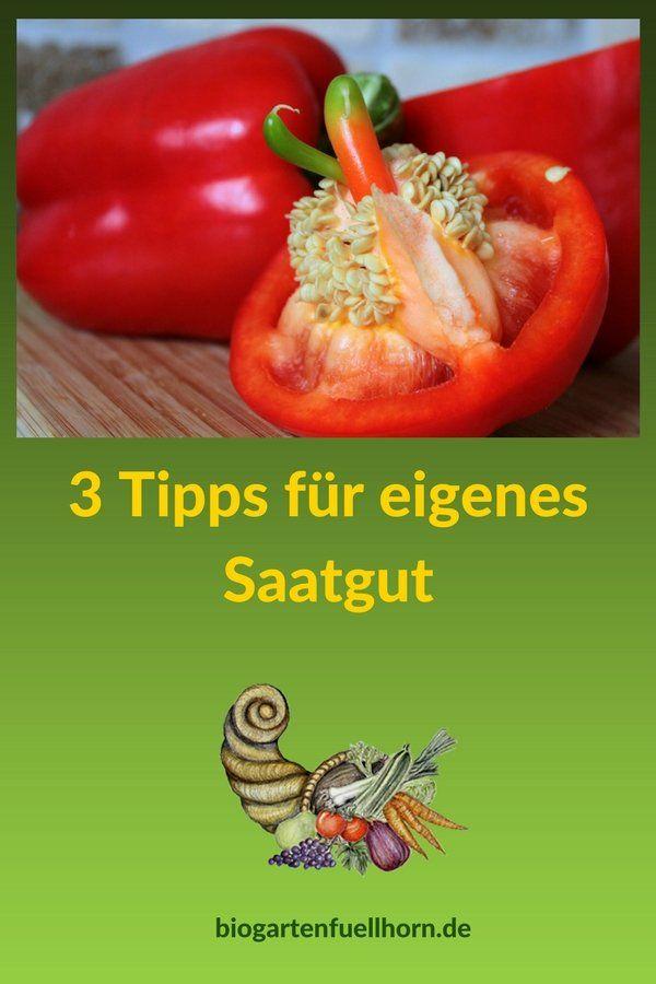 3 Tipps für eigenes Saatgut - Wie kannst Du eigenes Saatgut gewinnen? #garten #saatgut #selbstversorger