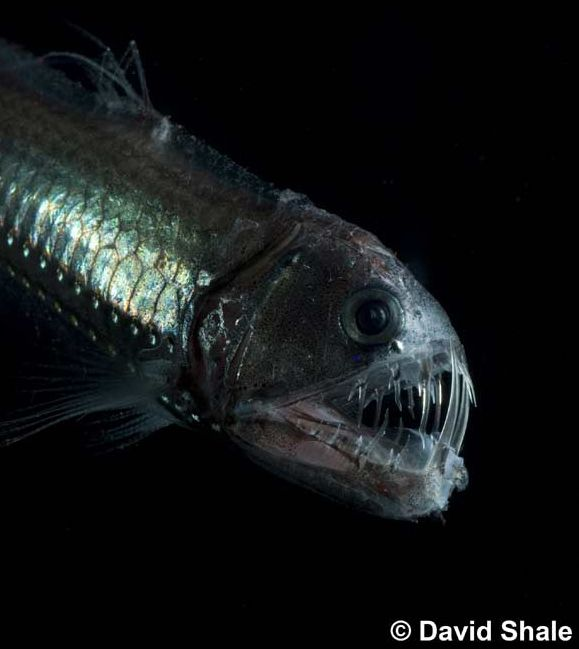 deep sea life photos | One of the new images taken on the deep-sea research mission was this ...