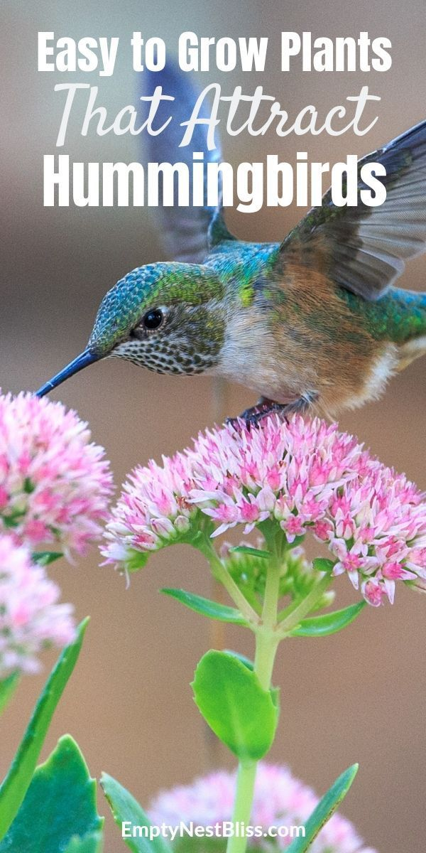 Top Flowers For A Hummingbird And Butterfly Garden How To Attract Hummingbirds Beautiful Flowers Garden Plants