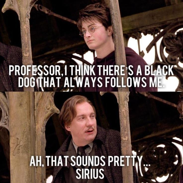 Your Daily Scoop Of Funniest Harry Potter Memes Ep 16 Harry Potter Daily Funniest Har In 2020 Harry Potter Memes Hilarious Harry Potter Puns Harry Potter Jokes