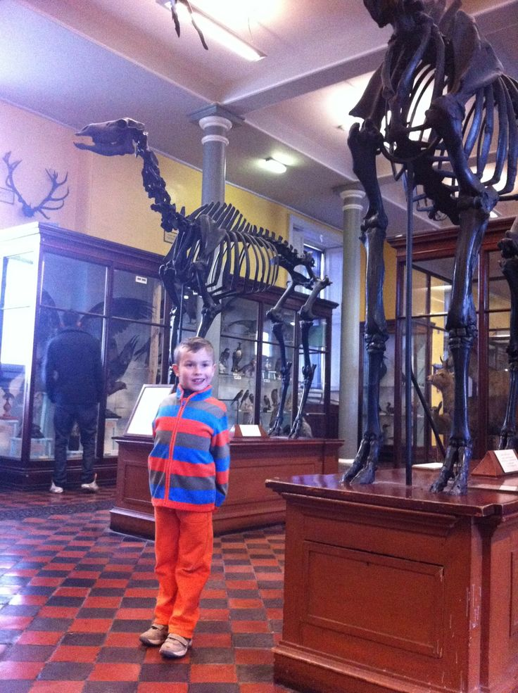 Natural History Museum in Dublin, Ireland