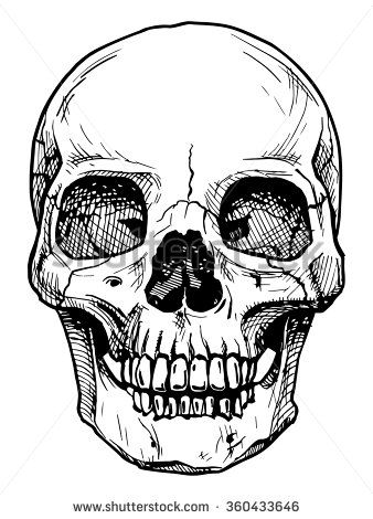 Vector black and white illustration of  human skull with a lower jaw in ink hand drawn style. - stock vector