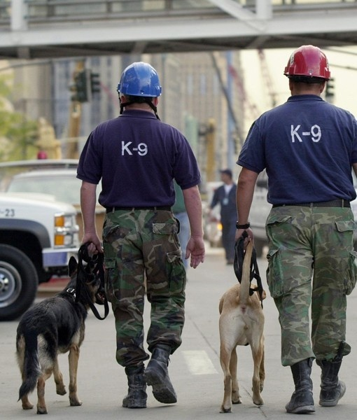K-9 search dogs with their handlers go back to duty following their treatment at a veterinary hospital unit a week after 9/11. As many as 100 dogs searched for victims on the site of the World Trade Center collapse, and were checked after  each stint of duty. The dogs were bathed and checked for dehydration, chemical inhalation and other potential dangers.