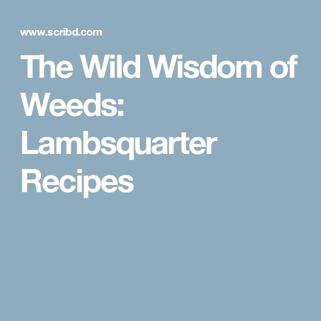 The Wild Wisdom of Weeds: Lambsquarter Recipes