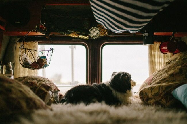 In love with @togetherweroam's set-up - cosy blankets, clever storage & the cutest pup! Best combo yet!  Emma Mae even has her own Instagram for all you dog lovers about there > @emma.roams   Did you know we have instagram? https://www.instagram.com/coolcampervans/  Follow CoolCampervans on there for amazing campervans 🚙 and vanlife inspiration. DM ✍️or #coolcampervans to get featured 😮