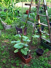Low Cost No Cost Trellises - Ladders