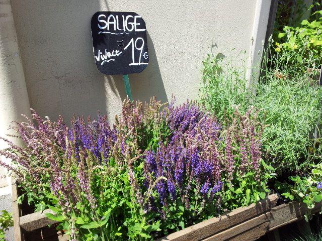 Am I Lavender ?....ma non je suis Sage !