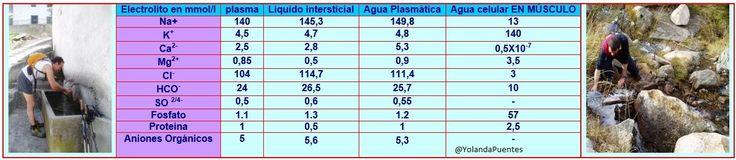 Composición del agua en la célula. #hidratación http://www.championchip.cat/lliga2007/medicina/hidratacion.htm