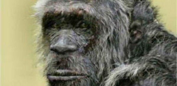 Grey Bigfoot sighting in Kentucky !