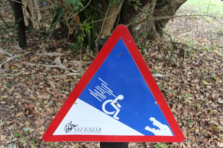 Last week I saw this road sign in Croc Centre St. Lucia, actually there were two. The boardwalk was like this and the fencing between us and the crocs a mere 60 cms high, bump in your wheelchair against the fence and it flips and you end indeed as food for the 5 meter tall crocodiles.