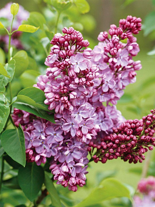 What To Prune When In Your Garden For The Healthiest Plants Spring Flowering Trees Flower Landscape Flower Pot Design