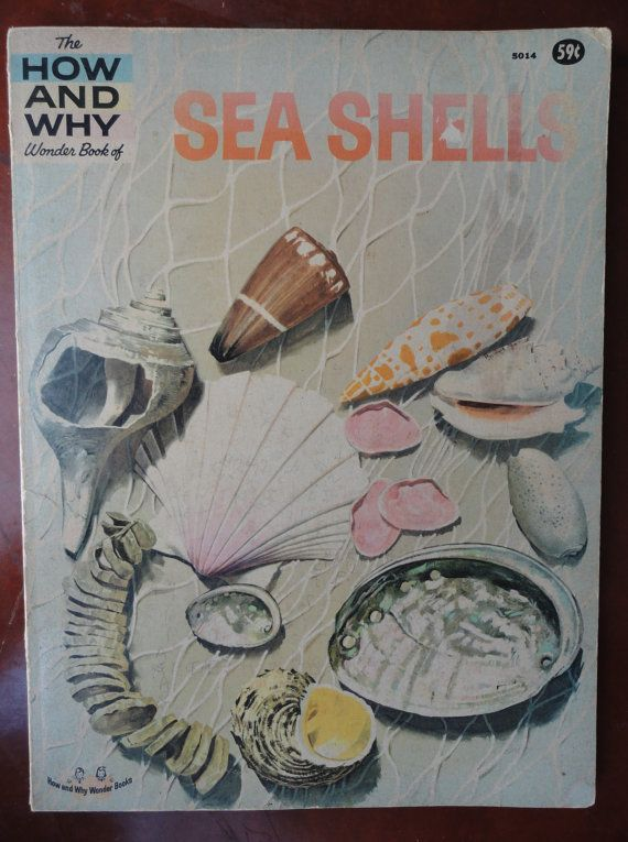 14 Best Images About Seashells Through A Child S Eyes On
