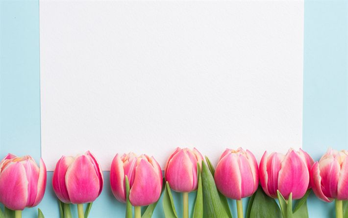 Download wallpapers pink tulips, spring, white sheet of paper, template for postcards, spring flowers, tulips