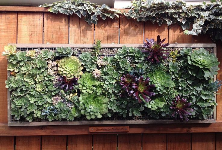 Pallet Wood Vertical Planting With Succulents This is a great Tutorial on how to plant the vertical pallet planter