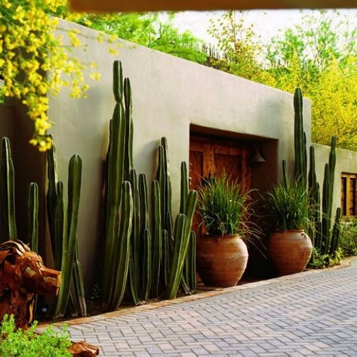 Recessed doorway and shutter openings make this courtyard wall nice.   I would like a wider planter and incorporate more colorful succulents to go along with the tall Sagauro Cactus.