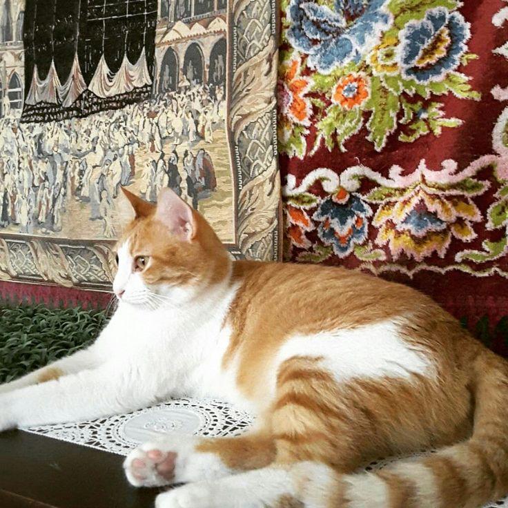 Happy  Caturday Nite ... Nite !😻🌑  #beautycat #catlovers #cute  #ilovemycats #ilovecats #kucingkesayangan  #kucinglucu