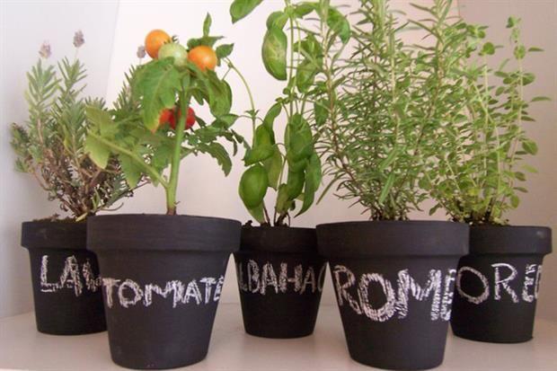 Flores, plantas y huertas para esta primavera - Living - ESPACIO LIVING