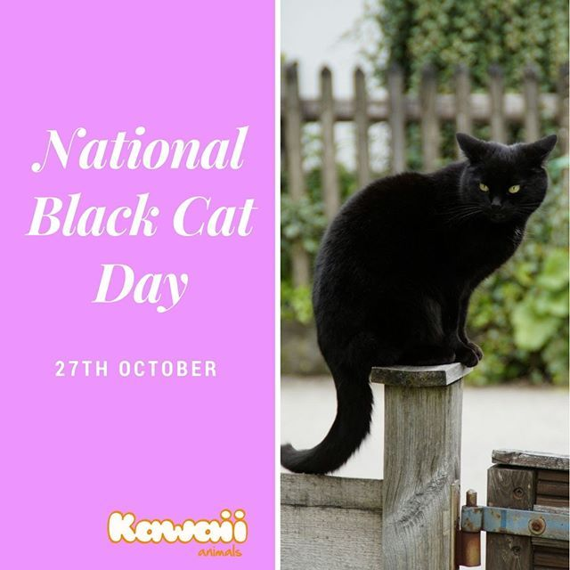 It S National Black Cat Day In The Uk Today If You Are Lucky Enough To Share Your Home With A Mini Panther Giv Black Cat Day National Black Cat Day Black