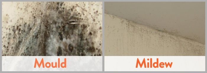 How To Remove Black Mold From Walls Mold In Bathroom Mold And Mildew Get Rid Of Mold