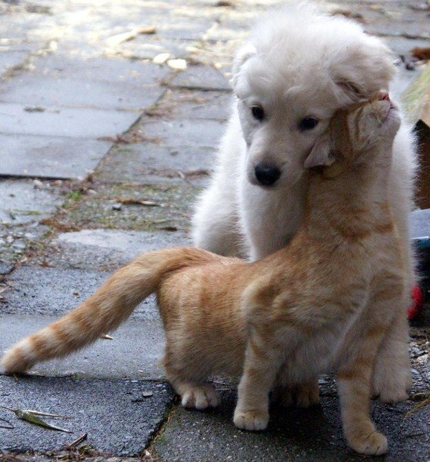 These sweet things are so cute; anyone who sees this and is not immediately jealous is a damn fool. | 21 Cuddly Cat And Dog Best Friends To Make You Squee: