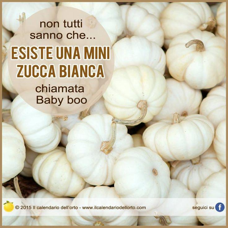 """Esiste una mini zucca bianca chiamata """"Baby boo"""""""
