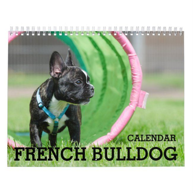 French Bulldog Calendar 2020 Zazzle Com French Bulldog White