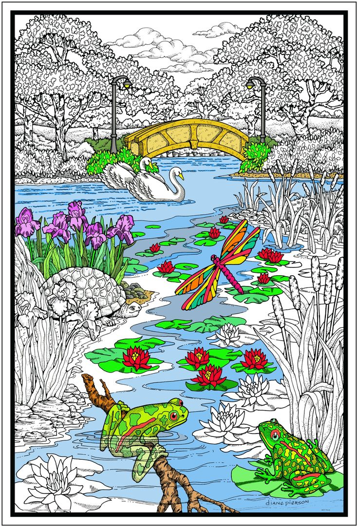 The zoology coloring book - Pond In The Park Giant 22 X 32 5 Inch Line Art Coloring Poster