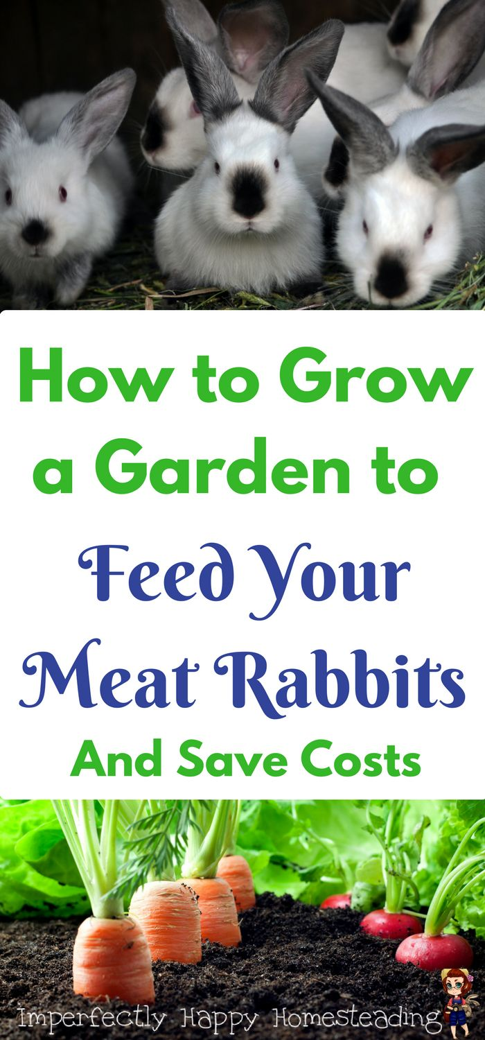 How to Grow a Garden to Feed Your Meat Rabbits and Save Costs.