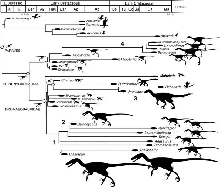 How Dinosaurs Shrank and Became Birds