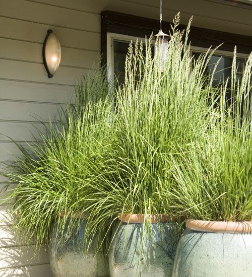 Ornamental grasses in beautiful containers, Potted Plants As Living Screen Design, Pictures, Remodel, Decor and Ideas