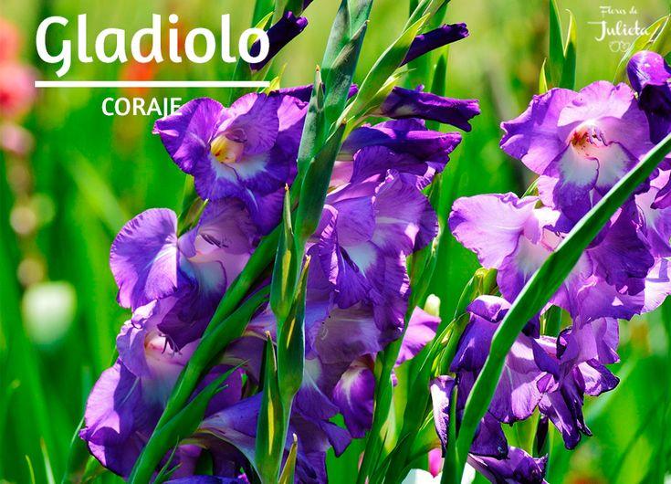 Regalar un ramo de flores variadas que contenga gladiolo o un ramo elaborado solo con gladiolo representa amor y pasión. Los puedes encontrar en distintos colores como blanco, rojo, rosa, amarillo, naranja y morado entre otros, además de jaspeado...Leer más.